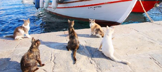 Тасиро — земля кошачьих жителей