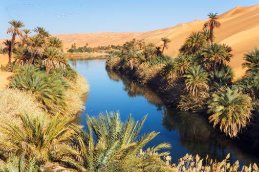 Baharya Oasis56ty