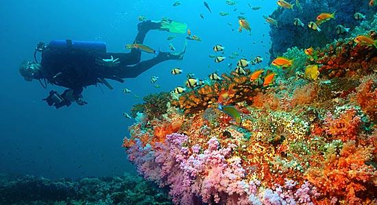 1317732175_dajving-na-maldivax